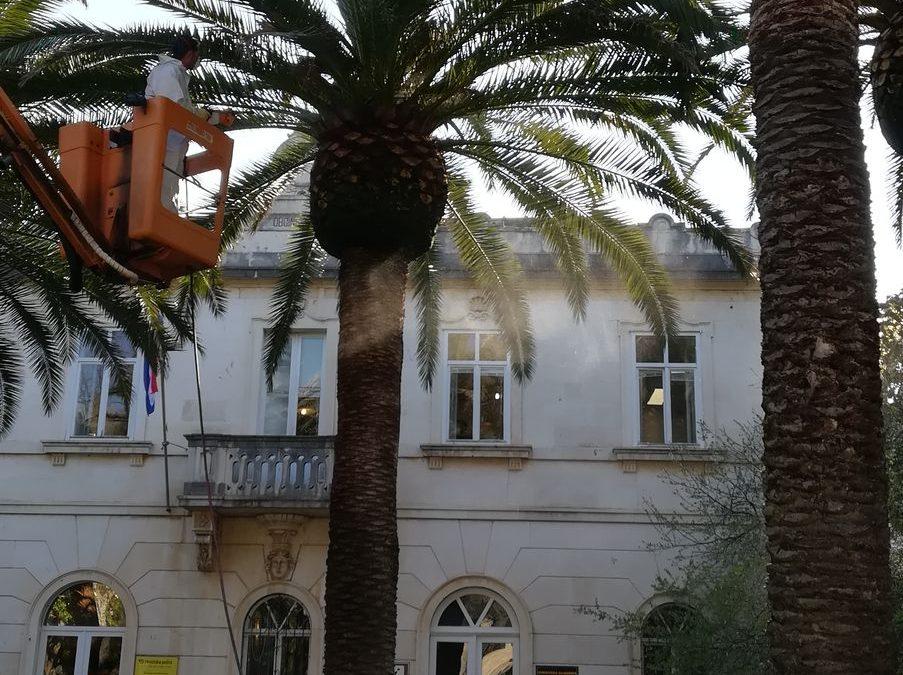 Obavijest o radovima na zaštiti palmi od nametnika crvene palmine pipe